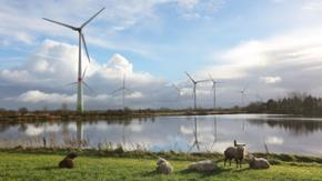 Mehrere Windräder an einem See. Im Vordergrund stehen Schafe auf einer Wiese.