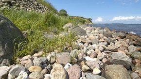 Eine grasbewachsene Küste mit Felsen