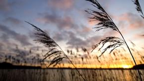 Abendstimmung am Ufer der Schlei