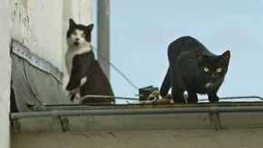Zwei Katzen auf einem Garagendach.