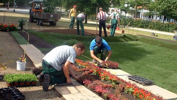 Wiederherstellung eines Teppichbeetes im Kieler Schlossgarten: Gärtner bei der Arbeit
