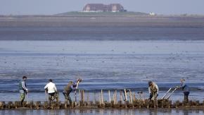 Küstenschutz ist viel Handarbeit: Wasserbauwerker beim Lahnungsbau.